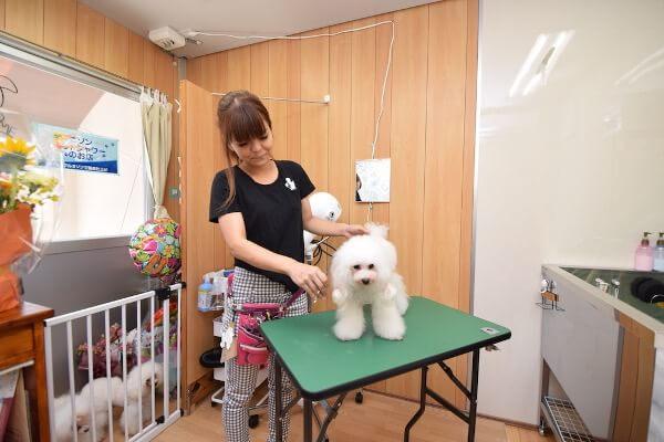 Dog Salon Milky Pua