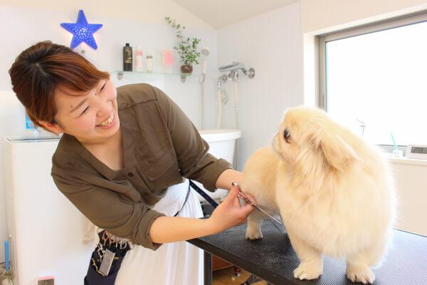 あにも!AHT dog groomers studio