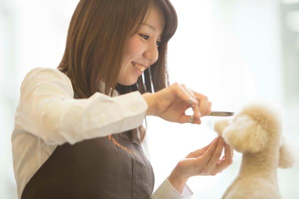 PET-SPA オリナス錦糸町店 トリミング画像