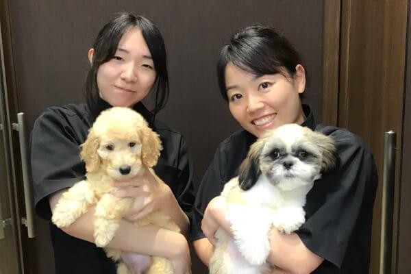 ペットの専門店コジマ 四街道店