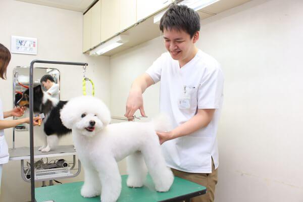 田中動物病院(トリミング)
