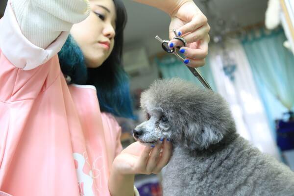 monmo・roomdog