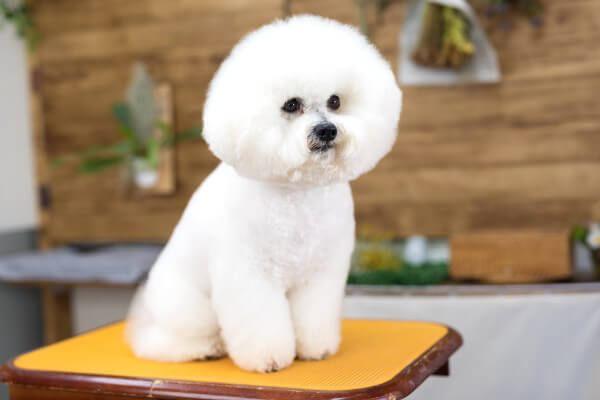 Dog Trimming Salon COPAIN