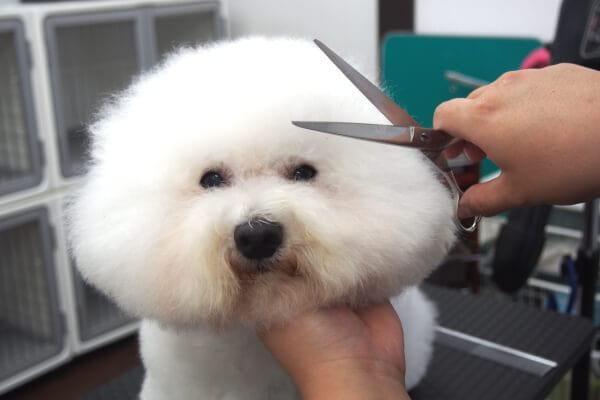 Dog Salon Cherish(ドッグサロン チェリッシュ)トリミング画像