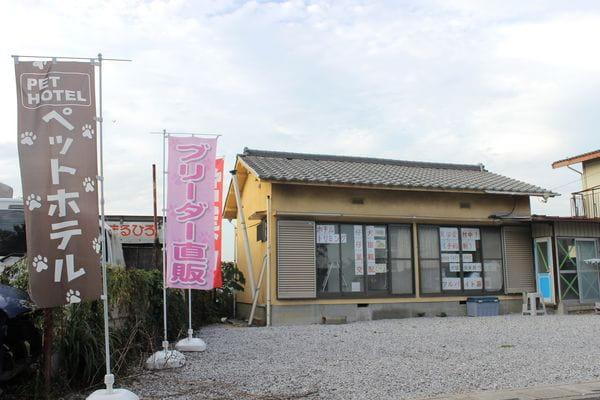 犬猫倶楽部 ウィズ 上尾店