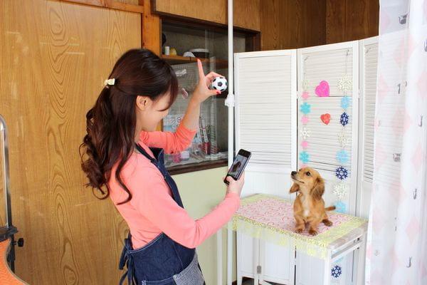 Dog Salon はあと