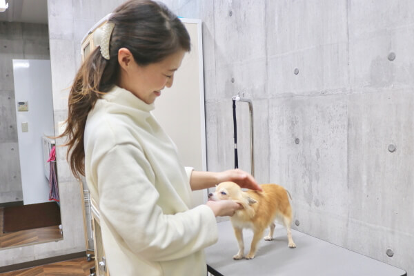 Pet Salon heal(福岡市南区)