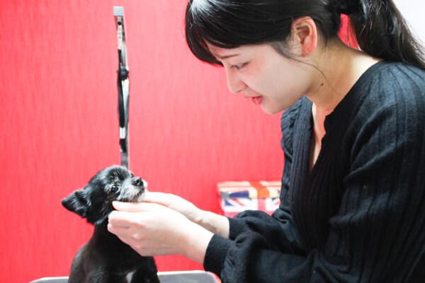 dogsalon SHIZUKU