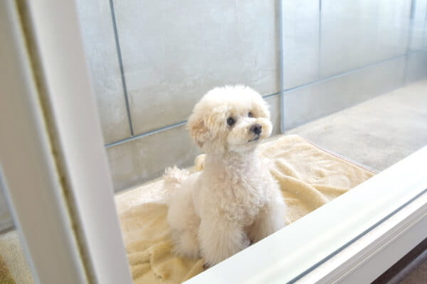 Dog salon FLOCHE(ホテル)