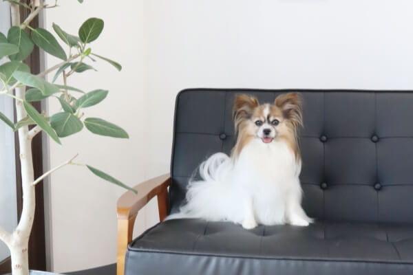 Dogsalon MimiToShippo