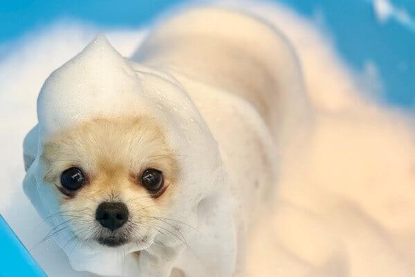 Dog salon&Hotel WAN'CREW