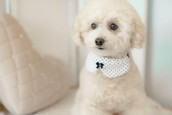 Dog Salon nonno【3/1 OPEN]】