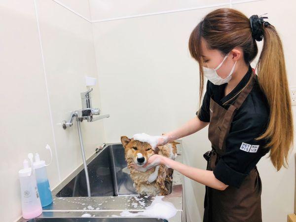 ケーヨーデイツー入間下藤沢店ペトリス