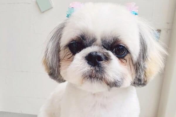 犬の散髪屋 りあん