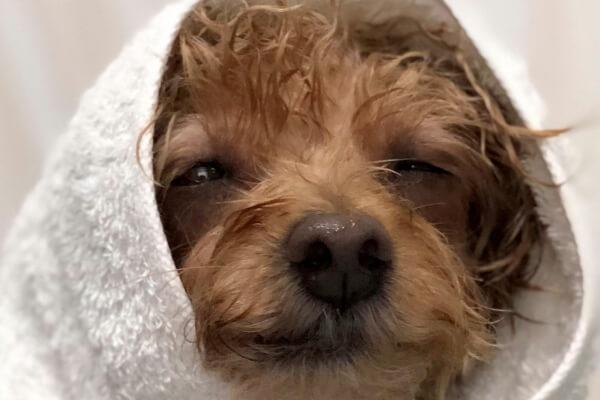 Dog Salon WanRoom
