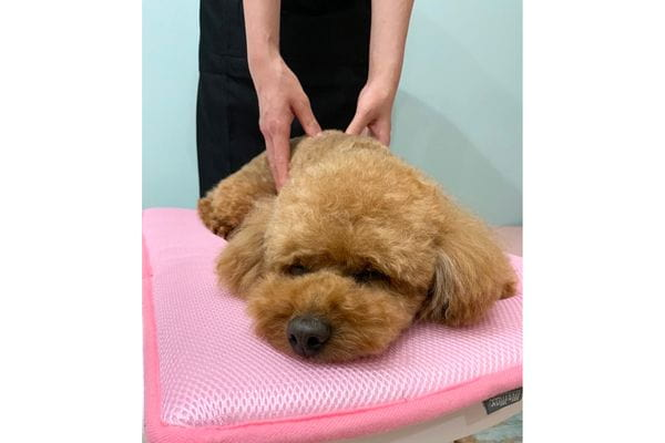 Dog Salon Mona&Mary