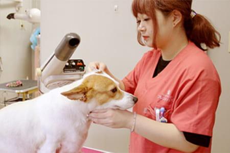 愛犬の美容院&ホテル ペットサロン フレンドハウス