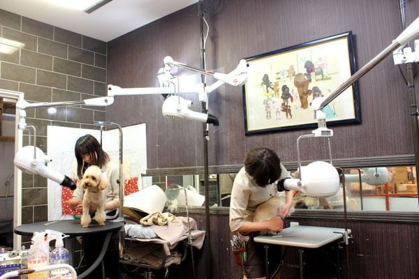 犬ごころ TOKYO-BAY店 トリミング写真