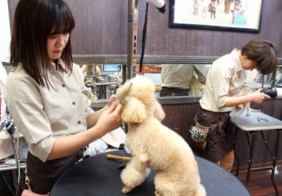 犬ごころ TOKYO-BAY店