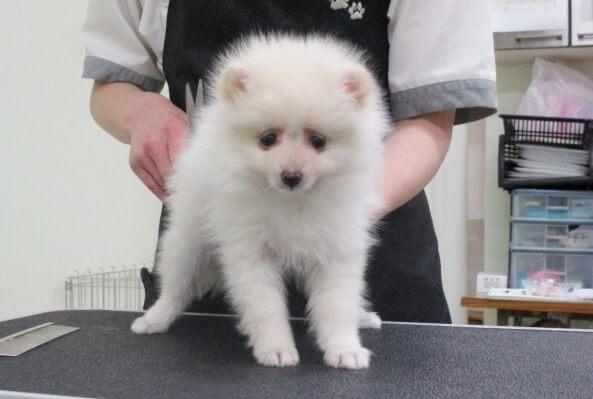 空港ドッグセンター 堺浜店 犬