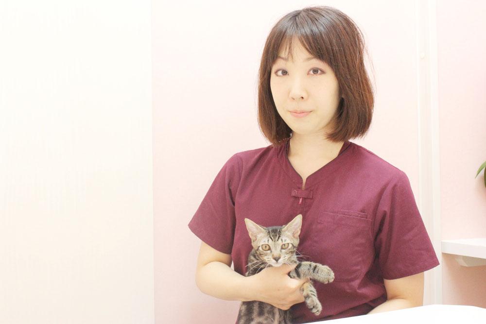 猫の診療室モモ 院長写真